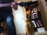 DOG SINGS FOLK MUSIC