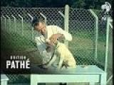 Dog Sanctuary 1963
