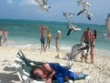 Drunk's Asleep On The Beach - Friends Employ Seagulls