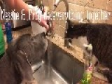 Dog And Cat Share A Drink At The Sink