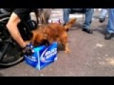 Dog Keeps His Beer
