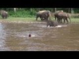 Elephant Rescues Man In River