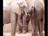 Elephant Packing A Trunk