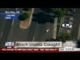 Epic Llama Chase Captivates Nation: Part 1