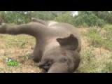 Elephant Postmortem