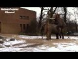 Elephant Mating Video Elephant Makes Love
