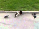 Epic Cat Fight