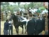 Erdogan Is Kicked In The Balls -- By A Horse NO JOKE