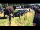 Elephant Banging On A Car And Attacking Touris
