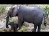 Elephant Coming Back To Life