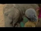 Elephant Lullaby
