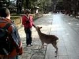 Even The Deer Are Polite In Japan