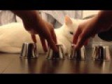 Excruciatingly Hilarious Cat Compilation HD