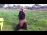 EPIC - I Cant Even Fucking Hula Hoop SMART BEAR