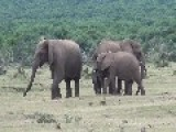 Elephant Family Reunion