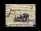 Elephant Attack Excavator