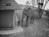 Elephant Collects Garbage