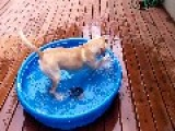 Excited Puppy Enjoys New Water Pool