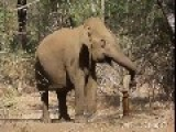 Elephant Gives It A Go And Pumps Some Water