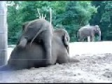 Elephant Gets Rejected