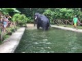 Elephant Takes A Dump In The Poole