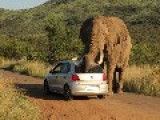 Elephant Humps Vw