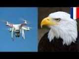 Eagles Vs Drones: Dutch Police Train Birds Of Prey To Combat Airborne Terrorist Devices - TomoNews