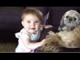 Funny Dog And Baby Playing Together