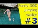 Funny Dog Jumping Into The Water