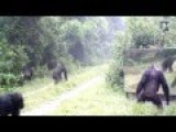 Funny Video Gorilla In Front Of A Mirror