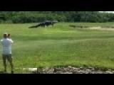 F Ing Huge Gator