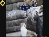 Funny Cat Versus Dog