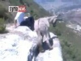 FSA Moderate Terrorists Abusing Defenseless Donkey!