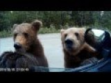 Feeding Bears In Russia