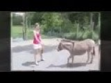 Funny Accident In Zoo Jealous Donkey