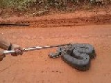 Firemen Catch Injured Anaconda In Brazil