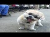 Funny Dogs Video 2015 - Dogician