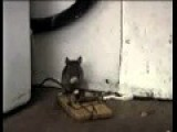 Funny Mousetrap Tom & Jerry