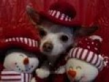 Funny Christmas Puppy