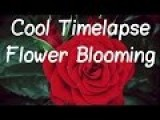 Flower Time Lapse Photography