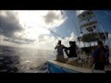 Fishing In Costa Rica, 12 Sailfish In 1 Full Day Catch An Release
