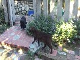 Funny 'Cat Stand-Off' Found In LA Garden