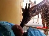 Final Farewell: The HEARTBREAKING Moment A Giraffe KISSES His Cancer-Stricken Zoo Keeper Mario!