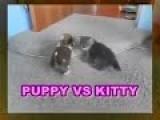 FUNNY VIDEOS - PUPPY VS KITTY