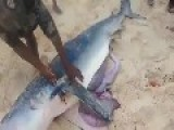 Fisherman Caught A Shark Have Babies Inside Her