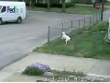 FedEx Driver Loses Truck