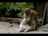 Funny Monkey Baby Play With Cat