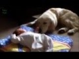 Funny Dog Overflowing Love To Lick Baby
