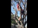 Fresh Fruit In The Whore Tree