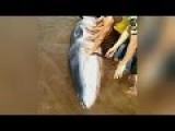 Feelgood Whale Rescue - China